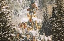 #strobili #pinecone #winterwonderland #snow